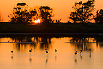 Flamingos at sunset in the Ria Formosa Park near Faro, capital city in the Algarve region of Portugal.