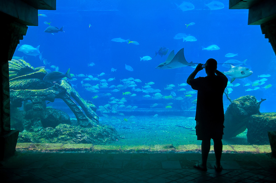 A visitor snap a picture in aquarium, in the caribbean.