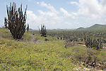Washington Slagbaai National Park, Bonaire, Netherlands Antilles; view of the valley filled wth cactus from atop the Seru Bentana lighthouse , Copyright © Matthew Meier, matthewmeierphoto.com All Rights Reserved