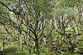 Deciduous woodland trees near the village of Croesor in the Snowdonia National Park.