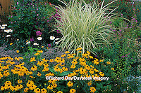 63821-03212 Black-eyed Susans & Varigated Japanese Silver Grass    IL