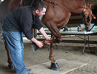 """Nathan Slaven (right) of Independence, Ore., inspects, Tee Time, a Tennessee Walking Horse owned by Sue Williams of McCleary, Wash., at the Northwest Walking Horse Classic in Spanaway, Wash., on July 11, 2015. Slaven is a """"designated qualified person (DQP) certified by the USDA to check for soring, an illegal practice that involves burning a horses skin with chemicals. The horse passed his inspection. (© Karen Ducey Photography)"""