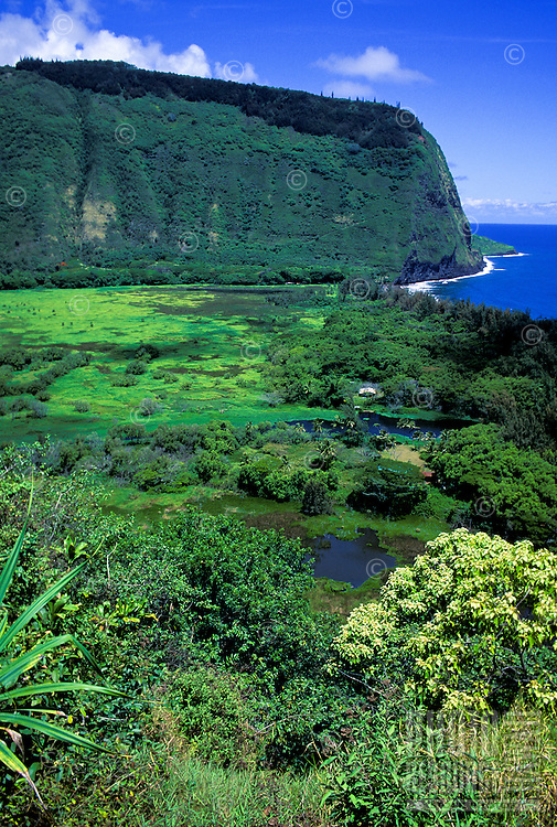 Waipio Valley, Big Island. View is from the road into the valley.