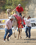 Dennis Baxley races at the International Camel Races in Virginia City, Nev., on Friday, Sept. 9, 2011. .Photo by Cathleen Allison