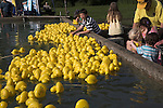 Yellow plastic ducks each individually numbered in pond Woodbridge, Suffolk, England