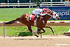 Ninety Five South winning at Delaware Park racetrack on 6/2/14