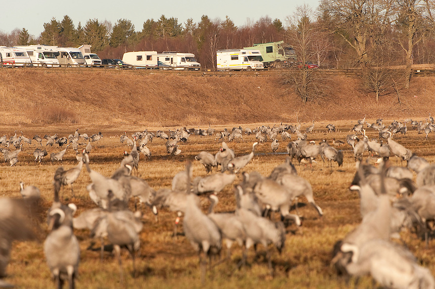 Birdwatchers, Eurasian Crane (Grus grus), Lake Hornborga, Sweden. April 2009. Mission: Sweden (crane and swan)