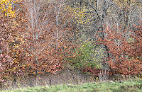 Fall landscape, wildflowers at  Perch Creek Nature Habitat and at the Blackwell landfill site.