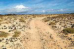 Sandy track through dunes at Caleta de Caballo, Lanzarote, Canary islands, Spain