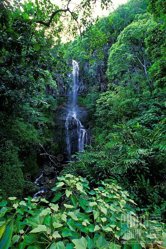 A beautiful waterfall cascades down a lush green cliff on the road to Hana on the island of Maui.