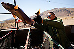 Tony Eben releases a Lahontan cutthroat trout at the Paiute indian tribe's Pyramid Lake Fisheries in Sutcliffe, Nevada, April 18, 2013.