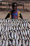 Afrique. Sénégal. Delta du Saloum