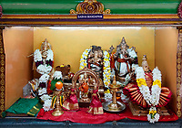 Nederland Den Helder -  2019.  Jaarlijkse tempelfeest bij de Hindoe tempel in Den Helder. Vereniging Sri Varatharaja Selvavinayagar voltooide in 2003 het gebouw dat wordt gebruikt voor het bevorderen van kunst en cultuur. Een ander deel wordt gebruikt voor het praktiseren van religieuze waarden. Het hoogtepunt van de feestperiode is het voorttrekken van de wagen ( chithira theer of ratham ). Sabha Mandapam.  Foto mag niet in negatieve / schadelijke context gepubliceerd worden.  Foto Berlinda van Dam / Hollandse Hoogte