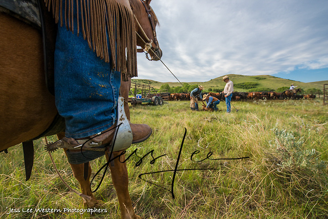 long rope Cowboys working and playing. Cowboy Cowboy Photo Cowboy, Cowboy and Cowgirl photographs of western ranches working with horses and cattle by western cowboy photographer Jess Lee. Photographing ranches big and small in Wyoming,Montana,Idaho,Oregon,Colorado,Nevada,Arizona,Utah,New Mexico.