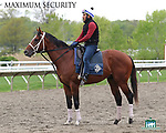 Maximum Security with exercise rider Edelberto Rivas checks out his surroundings at Monmouth Park in Oceanport, New Jersey on Thursday morning May 9, 2019, heading to the track for the first time since the Kentucky Derby. Photo By Bill Denver/EQUI-PHOTO