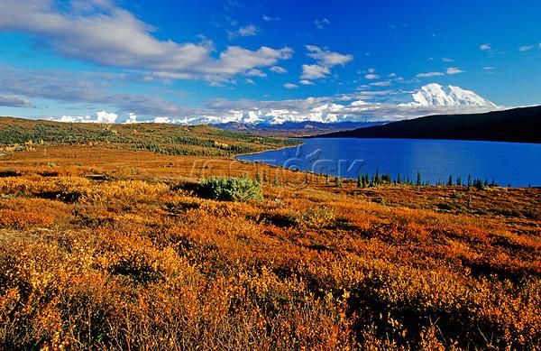 Autumn-coloured tundra, Mt. McKinley, North America's highest mountain, at back, Denali National Park, Alaska, USA