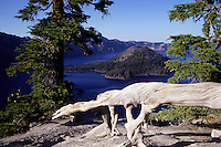 Beautifull photo of live and dead trees in framing Crater Lake Oregon foto, reise, photograph, image, images, photo,<br />