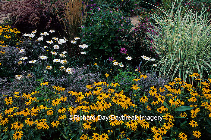 63821-03214 Black-eyed Susans & Varigated Japanese Silver Grass    IL