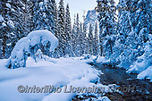 Tom Mackie, CHRISTMAS LANDSCAPES, WEIHNACHTEN WINTERLANDSCHAFTEN, NAVIDAD PAISAJES DE INVIERNO, photos,+British Columbia, Canada, Canadian, Canadian Rockies, Mt. Burgess, North America, Tom Mackie, USA, Yoho National Park, horizo+ntal, horizontals, landscape, landscapes, national park, pine tree, pine trees, season, snow, weather, winter, winter wonderl+and, wintery,British Columbia, Canada, Canadian, Canadian Rockies, Mt. Burgess, North America, Tom Mackie, USA, Yoho National+Park, horizontal, horizontals, landscape, landscapes, national park, pine tree, pine trees, season, snow, weather, winter, w+,GBTM180036-1,#xl#