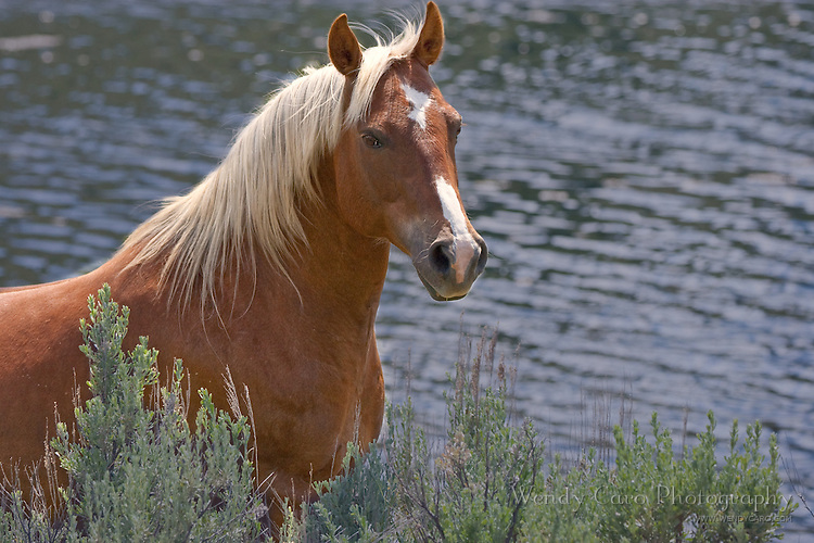 Sorrel pony with flaxen mane standing by a lake, closeup