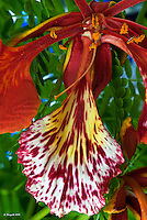 Macro Photography, Stacked Photography, Tropical flower, Miami nature,<br /> <br /> CLICK ON ADD TO CART ABOVE TO SEE AVAILABLE STYLES, SIZES AND PRICES