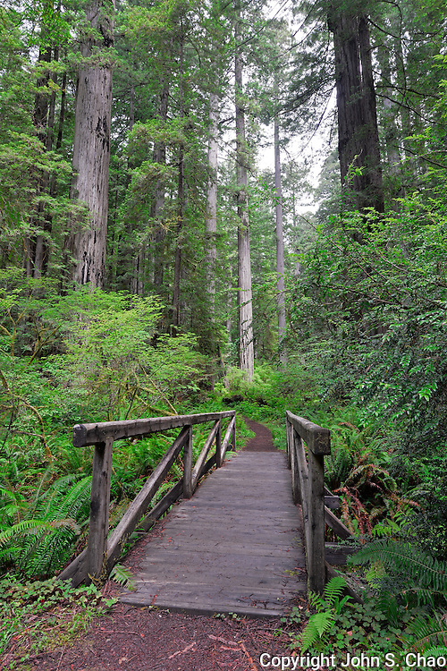Brown Creek Trail footbridge among Redwood forest in Redwood National and State Parks, California.