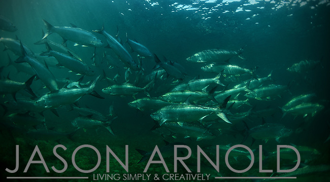 Tarpon Migration in Florida