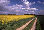 Europe, DEU, Germany, Northrhine Westphalia, Lower Rhine, Xanten, Typical rapeseed field, Lonely country lane, Formation clouds, Brassica napus var. napus....[ For each utilisation of my images my General Terms and Conditions are mandatory. Usage only against use message and proof. Download of my General Terms and Conditions under http://www.image-box.com or ask for sending. A clearance before usage is necessary...Material is subject to royalties. Each utilisation of my images is subject to a fee in accordance to the present valid MFM-List...Contact | archive@image-box.com | www.image-box.com ]