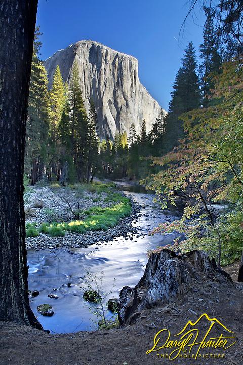 El Capitan, Yosemite Valley, Fall Colors, yellow cottonwood, merced river, Yosemite National Park, California