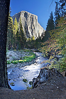 El Capitan, Yosemite Valley, Fall Colors, yellow cottonwood, merced river, Yosemite National Park, California