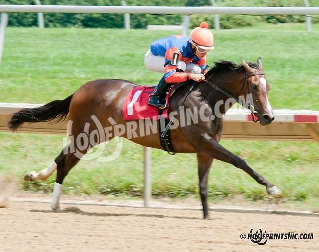 Who's In Town winning at Delaware Park on 7/15/13