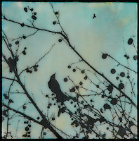 Mixed media photography in blues with bird in branch with berries.