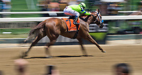 ELMONT, NY - JUNE 10: War Story #7, ridden by Javier Castellano, wins the Brooklyn Invitational Stakes on Belmont Stakes Day at Belmont Park on June 10, 2017 in Elmont, New York (Photo by Scott Serio/Eclipse Sportswire/Getty Images)