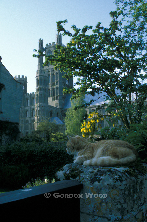 Cat Resting on Wall near Ely Cathedral Cambridgeshire England