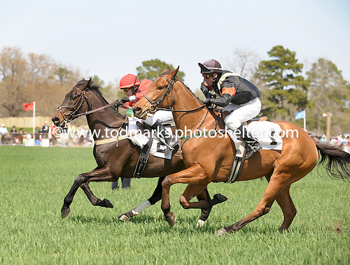 Virginia Minstrel and Carl Rafter  (2) outkick Class Century in the Camden Plate at Springdale Race Course.