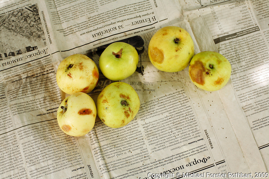 &ldquo;One question: you can eat apple from Chernobyl? Yes, of course. Eat, you can. But your shit, need bury in ground three meter.&rdquo; <br /> &mdash; Igor Chizhebskiy, ornithologist, Chernobyl Exclusion Zone<br /> <br /> Maria and Mikhail Urupa offer visitors apples from the tree behind their house. The Urupas are among 14 residents remaining in Parishev village, 10 miles downstream from the Chernobyl plant. Maria was born here and can&rsquo;t imagine living anywhere else. They survive on subsistence farming and small government pensions. &ldquo;If I was to leave this place, I&rsquo;d die already,&rdquo; Maria says.<br /> <br /> &ldquo;Here, we&rsquo;re all Chernobylites. We don&rsquo;t scare one another,&rdquo; says Nadezhda Burakova, another samosel in an interview by Svetlana Alexeivich. &ldquo;If someone gives you an apple or a cucumber from their garden, you take it and eat it, you don&rsquo;t hide it shamefully in your purse, and then throw it out&hellip; Anywhere else, we&rsquo;re foreign, we&rsquo;re lepers.&rdquo;<br /> <br /> &ldquo;I am like an apple that is beautiful on the outside,&rdquo; comments radiobiologist Natalya Manzurova, &ldquo;but you find inside is all rotten and full of worms.&rdquo; <br /> ------------------- <br /> This photograph is part the book of Would You Stay?, by Michael Forster Rothbart, published by TED Books in 2013. The photos come from Forster Rothbart&rsquo;s two long-term documentary photography projects, After Chernobyl and After Fukushima.<br /> &copy; Michael Forster Rothbart 2007-2013.<br /> www.afterchernobyl.com<br /> www.mfrphoto.com &bull; 607-267-4893 &bull; 607-436-2856 <br /> 34 Spruce St, Oneonta, NY 13820<br /> 86 Three Mile Pond Rd, Vassalboro, ME 04989<br /> info@mfrphoto.com<br /> Photo by: Michael Forster Rothbart<br /> Date:  7/2009    File#:  Canon 5D digital camera frame 73676<br /> -------------------