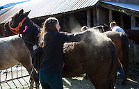 Hannah Mueller, DVM, co-founder and vice president of the Northwest Equine Stewardship Center and practice owner of Cedarbrook Veterinary Care, brushes off loose hair, dirt and scabs from horses on Summer Raffo's farm in Oso, Washington on April 1, 2014. The 16 horses belong to Summer Raffo, who died in the Oso mudslide on March 22, 2014. Along with help from another vet and volunteers the horses received basic vet care, grooming and were fed fresh hay.