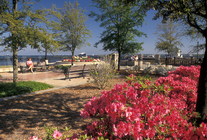 Charleston, South Carolina, SC, Azaleas in bloom in Waterfront Park along Charleston Bay in Charleston in the spring.