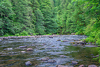 ORCAN_D167 - USA, Oregon, Mount Hood National Forest, Salmon-Huckleberry Wilderness, Lush spring forest borders the Salmon River - a federally designated Wild and Scenic River.