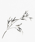Bird perching on a bamboo branch with leaves artistic oriental style illustration, Japanese Zen Sumi-e ink painting on white rice paper background
