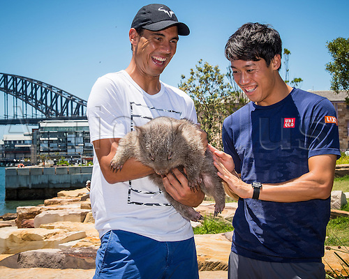 09.01.2017 Sydney, Australia.  (L-R)  World No. 9 Rafael Nadal (ESP) and World No.5 Kei Nishikori (JPN) pictured holding native Australian Wombat 'Lola' at a media call prior to the FAST4 Showdown Australian versus Rest of the World team  to be played at the International Convention Center in Sydney. Fast4 Tennis has been described as the Tennis version of cricket's Twenty20.