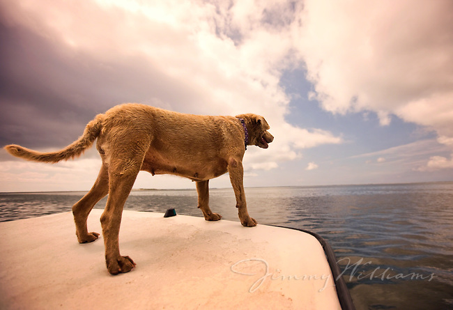 A dog enjoys the wind from a boat ride through North Carolina coastal waters