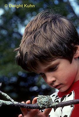 HU14-004x  Ruby-throated Hummingbird - boy looking at empty nest -  Archilochus colubris