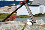 Seagull at Peggy's Cove.  Images of The Canadian Maritime Provinces of Nova Scotia and Prince Edward Island.