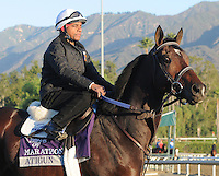 Atigun, trained by Ken McPeek,exercises in preparation for the upcoming Breeders Cup at Santa Anita Park on October 30, 2012.