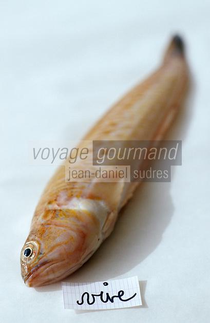 Europe/France/Provence-ALpes-Côte d'Azur/13/Bouches-du-Rhône/Marseille/Les Goudes: Les éléments de la bouillabaisse de Gaby le pêcheur au bar des Goudes - Les poissons: La vive