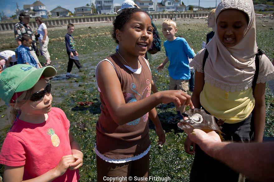 The fifth graders find mysterious eggs on the tidal flats, and want to know more about them
