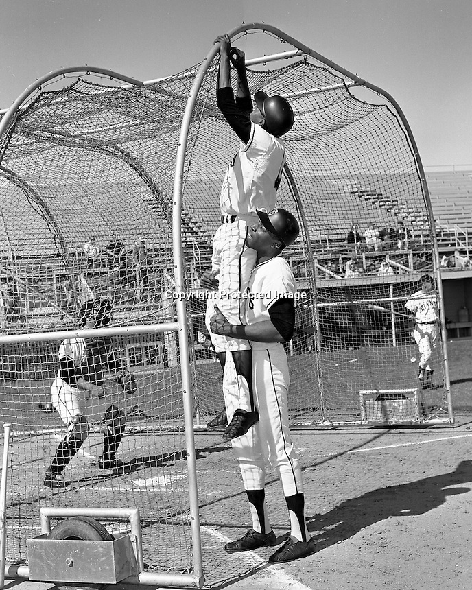 San Francisco Giants Spring Training in Casa Grande,Arizona in 1967. Willie McCovey lifts a unidentified player to fix the batting cage net..(photo 1967 by Ron Riesterer)