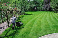 Man mowing a lawn, Chipping, Lancashire.