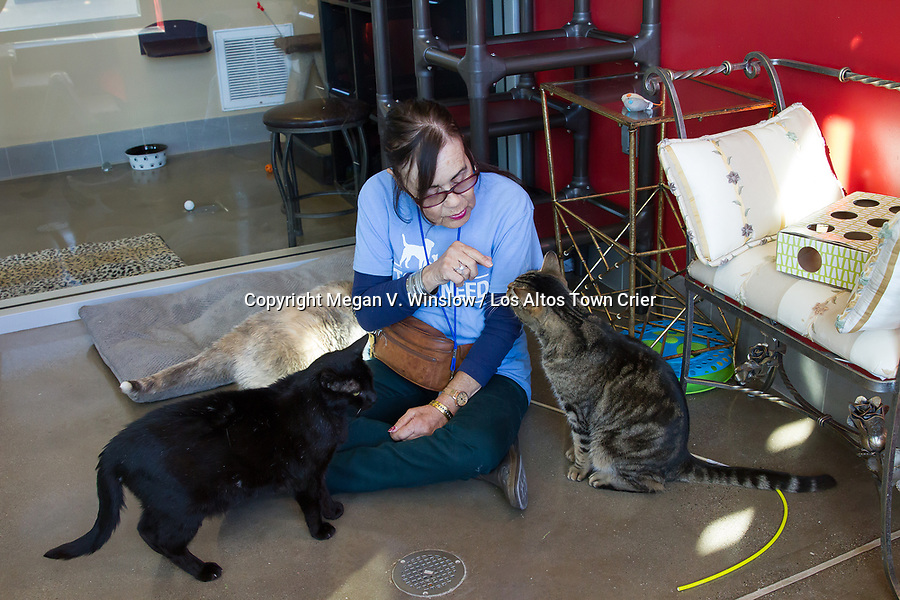 """Pets In Need volunteer Beverly Davis """"converses"""" with some of Pets In Need's felines within their decked-out digs."""